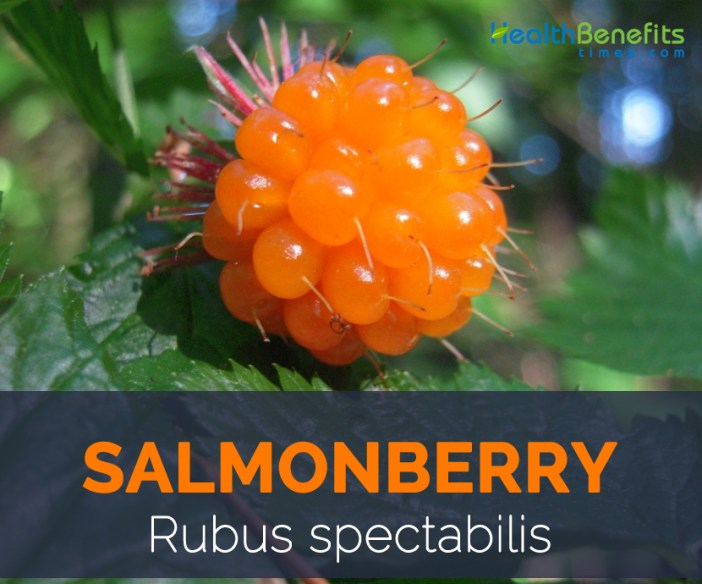 Salmonberry facts and health benefits