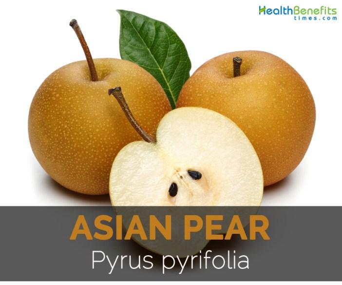 asian-pear-pyrus-pyrifolia