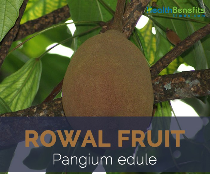 Rowal fruit facts and health benefits