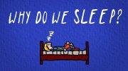 Why Do We Sleep ?