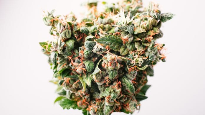 First study to look at the use of cannabinoids for treating acute pain