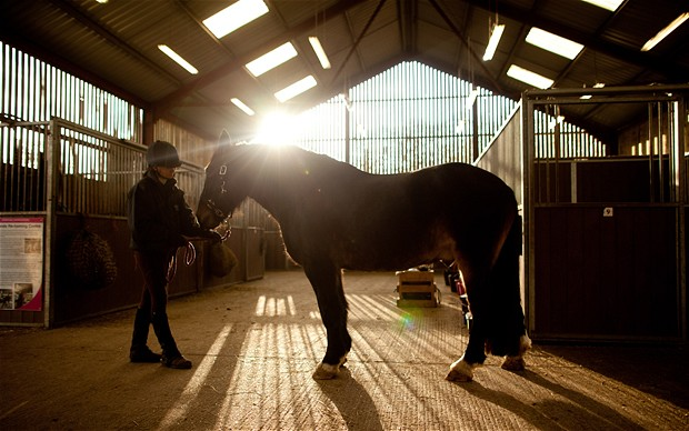 Top 10 Health Benefits of Owning a Horse