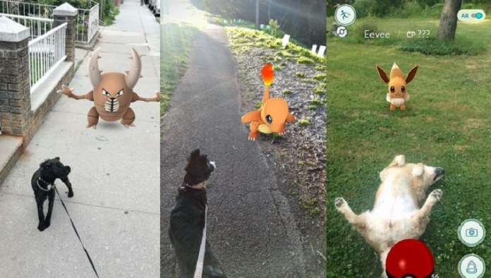 pokemon-go-dog-walking-safety