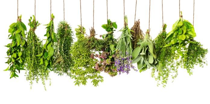 healthiest herbs