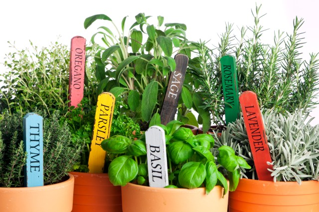 variety of potted garden herbs, closeup