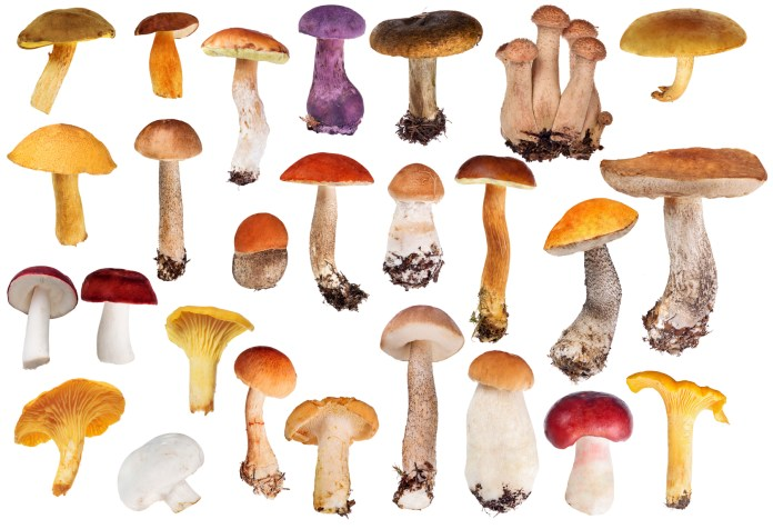 healthiest mushrooms