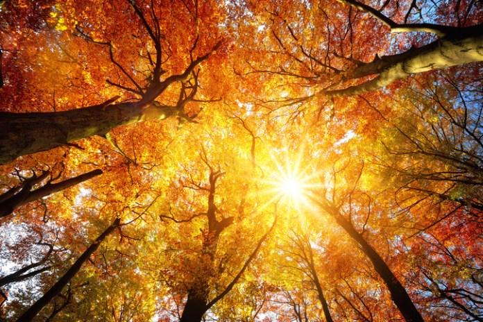 healthy fall
