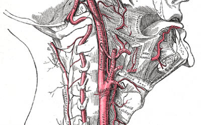 Blood Flow In The Upper Cervical Spine