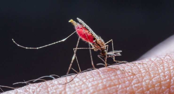 Fight against malaria: is the end in sight for India?