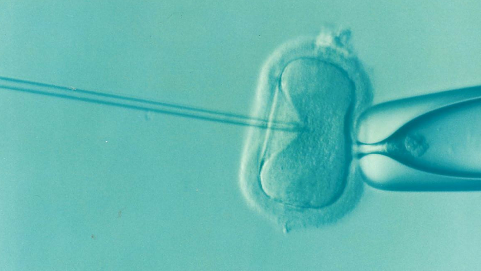 <em><strong>A demonstration of IVF treatment.</strong></em>