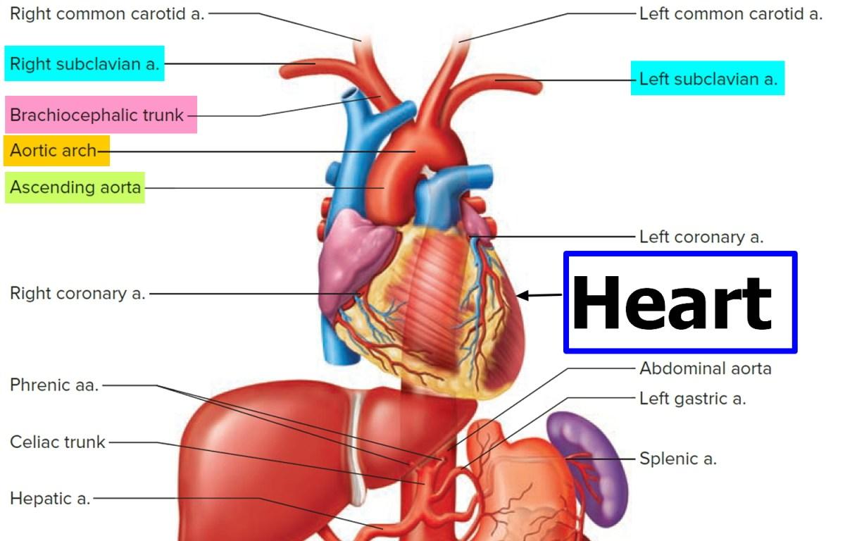 Subclavian Artery Stenosis