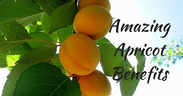 benefits of Apricot fruit