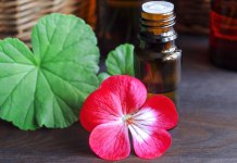 benefits of Geranium Oil