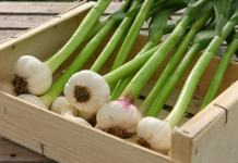 Green garlic benefits
