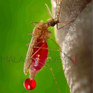 Malaria Fever, Causes, Prevention, and Treatment