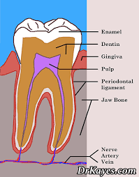 Dental Terminology And Their Uses