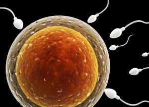A new cause of female infertility