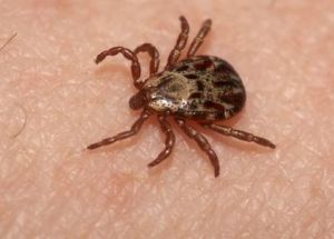 All new updates on ticks and Lyme disease