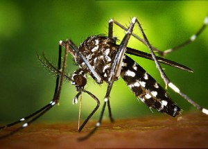 All you need to know about the Zika virus