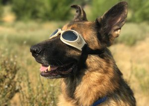 Our Pets Also React to Solar Eclipses