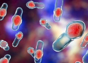Stay Healthy and Avoid Clostridium Difficile Infections