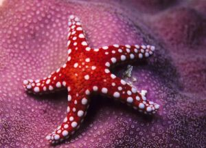 Starfish are Back on the West Coast