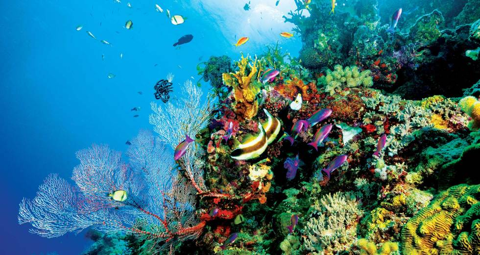 Australian Government Gets More Involved: Great Barrier Reef to Receive Life Support
