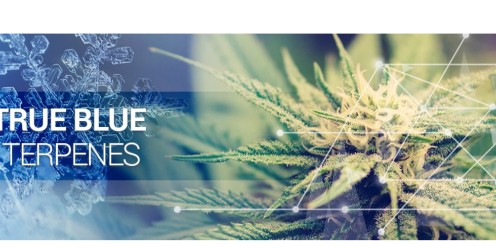 Vaping and Terpenes – The Future of Flavors