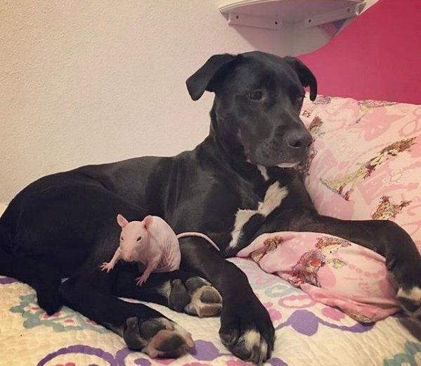 A True Animal Friendship – A Dog Visits His Rat Friend's Grave