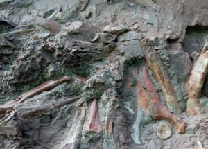 Rare Dinosaur Remains Discovered in Egypt