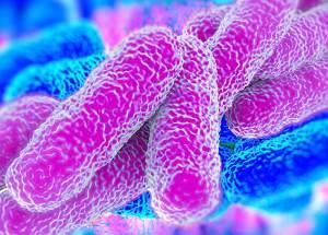 Insufficient Chlorine Level Provokes Lethal Legionella Epidemic