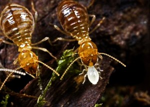 Scientists Have Sequenced Termite's Gut Microbiome