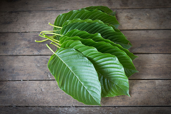 The FDA Warns That The Kratom Herbal Supplement Contains Opioids