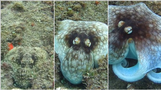 Cuttlefish Helps Scientists Develop A 3D Invisibility Cloak
