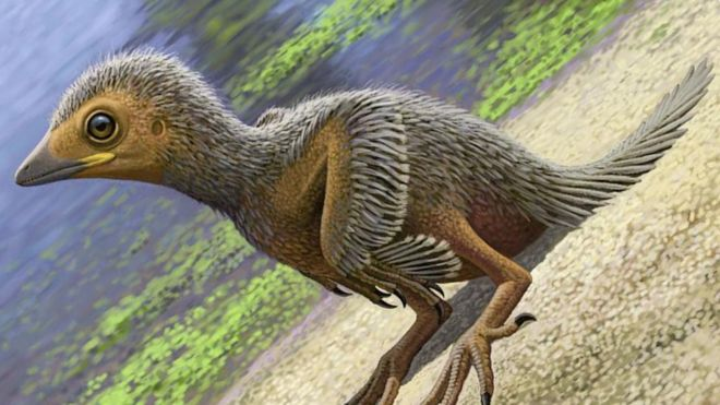 The Researchers Have Revealed The World's Smallest Bird Fossil Study's Conclusions