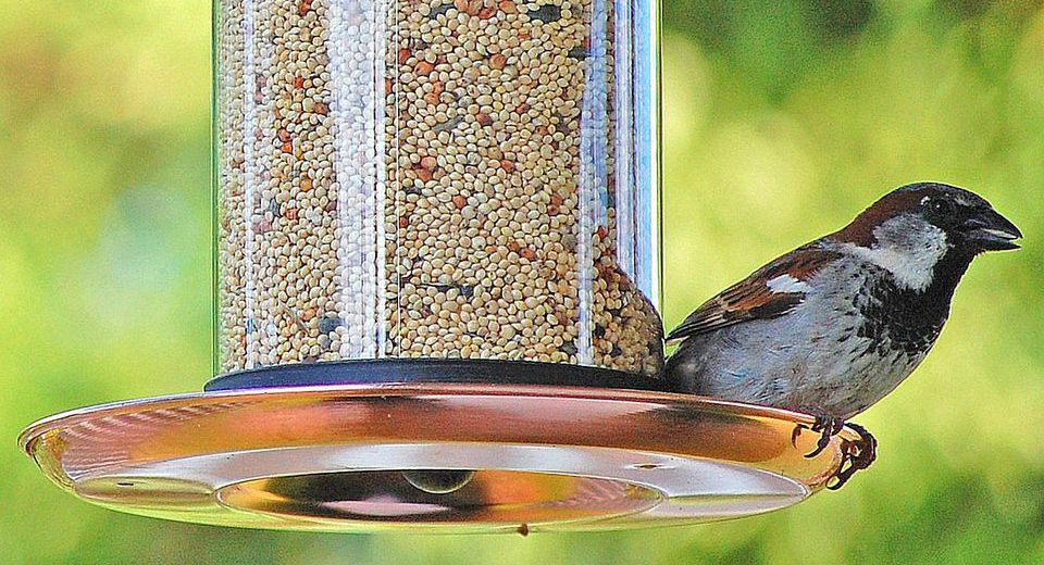Be Aware of the Diseases you can Get While Feeding the Birds