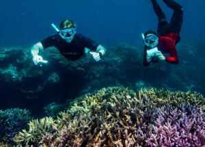 Divers Want to Repopulate Reefs with Super Corals