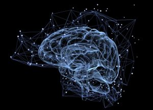 The Brain Is Not Producing New Neurons In Adults