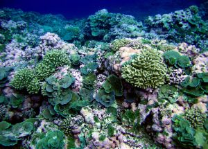 The Damage Done to Coral Reefs Shown in an Experiment
