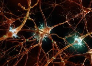 Researchers Discovered What Brain Processes Occur During Sleep