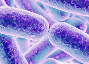 The Salmonella Outbreak In The US Made New Victims