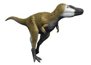 Baby T. Rex Or A Small Tyrannosaurus Species, Nanotyrannus – The Montana Dinosaur Fossil Raises Controversies