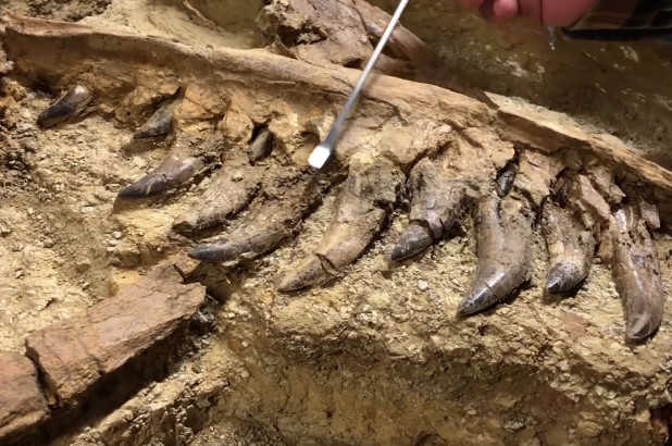 T-Rex Fossil Was Found But It's Not What You'd Expect