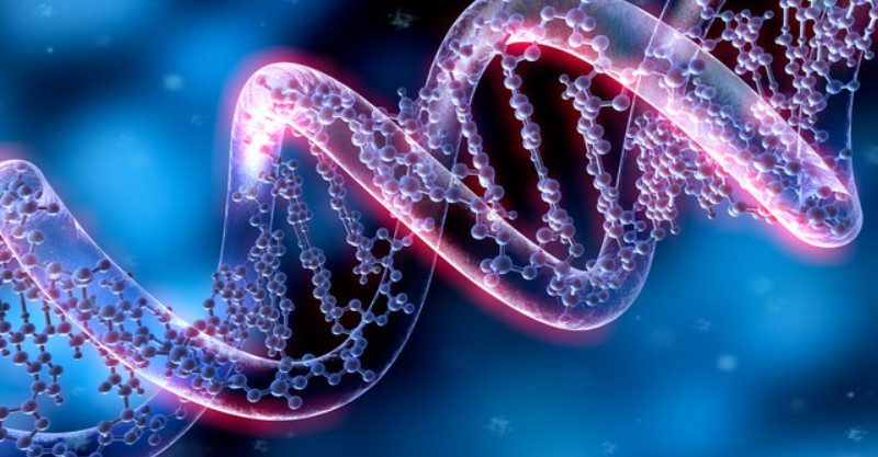 Why is dna important to an organism