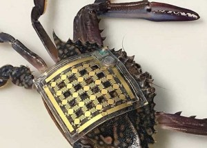 Marine Skin Wearable Sensors Device Was Developed To Track Marine Animals