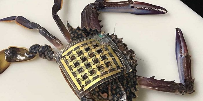 Marine Skin Wearable Sensors Device Was Developed To Track Marine Animals