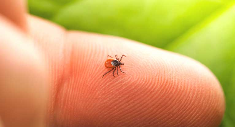 Are We Getting a Tick Explosion This Summer?