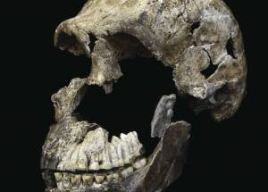Homo Naledi Ancient Humans Shed More Light On The Brain Evolution In Humans