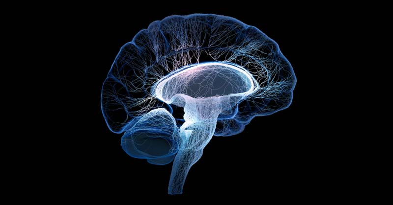 Cortical Gray Matter And Brain Health, In General, Are Linked To The Socioeconomic Position, A Study Revealed