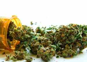 Medical Marijuana, Recommended By The US Oncologists, Although They're Not Sufficiently Informed On Cannabis